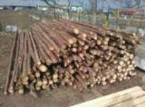 Softwood  Logs For Sale - Fir/Spruce 7-14 cm AB Construction Round Beams Romania