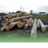 Ogrevno Drvo - Drvni Ostatci Bukva - Bukva Drva Za Potpalu/Oblice Cepane Rumunija
