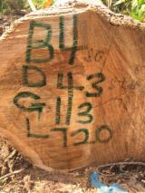 Tropsko Drvo  Trupci - Cilindrični Obrubljene Okrugle Grede , Teak, Gana