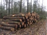 Poplar Hardwood Logs - Poplar Saw Logs, PEFC/FFC, diameter 40-110 cm