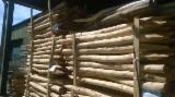 Hardwood Logs importers and buyers - Looking for Acacia poles ( barked round and square )