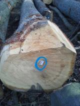 Hardwood  Logs - Selling Fresh cut european oak logs