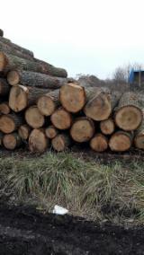 Laubschnittholz, Besäumtes Holz, Hobelware  Zu Verkaufen Litauen - Bretter, Dielen, Eiche
