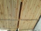 Schnittholz Und Leimholz Kiefer Pinus Sylvestris - Föhre - Bretter, Dielen, Kiefer  - Föhre