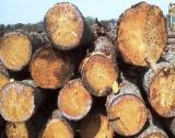 Softwood  Logs Demands - Looking for Douglas Fir Saw Logs and/or Timber, diameter 30 cm