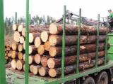 Nadelrundholz Zu Verkaufen - Schnittholzstämme, Pine