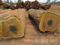 Quality-Iroko-Logs-and-Sawn-woods-for