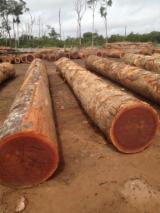 Tropical Wood  Logs For Sale - African Hardwood for sale (Iroko-Tali-Sapelli-Mahogany)