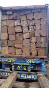 null - I NEED TO BUY 50-70 CONTAINERS OF KOSSO WOOD