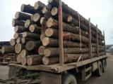Oak logs, BC quality, without rot