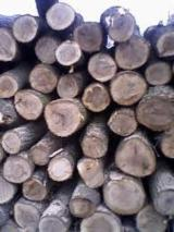 Firewood - Chips - Pellets Supplies - Firewood/Woodlogs Cleaved -- mm