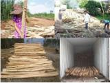 For Sale Acacia BARKED/NON-BARKED WOOD LOG Logs from Vietnam