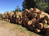 Hardwood Logs importers and buyers - Would like to buy White Ash, OAK, BEECH logs