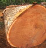 Tropsko Drvo  Trupci - Za Rezanje, Bilinga (Opepe, Badi), Zambija