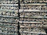 Bamboo Hardwood Logs - Dried bamboo poles for planting