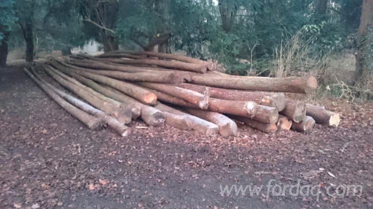 Larch-Logs-20-50