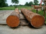Hardwood  Logs - Tali / Doussie / Sapelli Logs