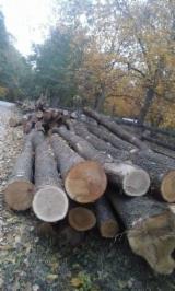 Hornbeam Hardwood Logs - -- mm Hornbeam, Brown Ash, Oak Saw Logs Romania Jud. Iasi