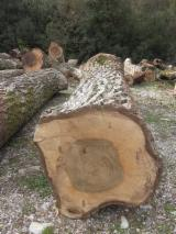 Finden Sie Holzlieferanten auf Fordaq - Woodlink IT g.l. - Furnierholz, Messerfurnierstämme, Walnuß