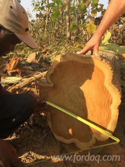 Teak-Saw-Logs-20-