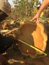 Offers Belgium - Teak Saw Logs 20+ cm
