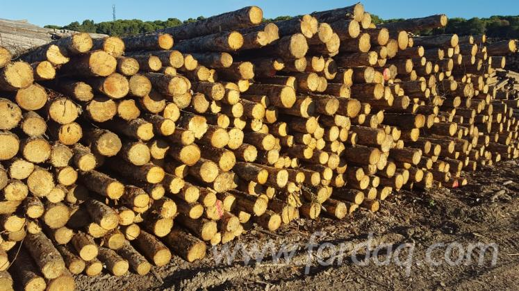 Sylvestris-Pine-Wood---Small-heartwood-%285-10-%29---Knots
