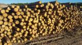 FSC Certified Softwood Logs - Sylvestris Pine Wood - Small heartwood (5-10%) - Knots Free