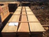 Germany Unedged Timber - Boules - Siberian Larch Loose 30-100 mm from Russia, Altai