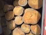 Eucalyptus Hardwood Logs - Eucalyptus Industrial Logs 40+ cm