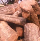 Cameroon Hardwood Logs - Teak Saw Logs, diameter 1 m