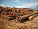 Tropical Wood  Logs - Logs wood