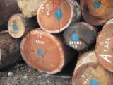 Tropical Wood  Logs - 70 - 90 cm Ekaba  Saw Logs Equatorial Guinea