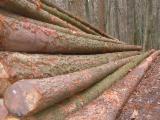 Nadelrundholz Zu Verkaufen Deutschland - Douglasien und Lärchen Stammholz zu verkaufen