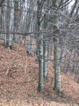 Paduri si Terenuri Forestiere De Vanzare - Cumpara Direct De La Proprietari - Vand padure fag 10 ha