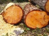 Nadelrundholz Zu Verkaufen Deutschland - Pinus Eliotis and Eucalyptus