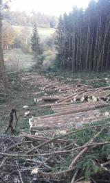 Softwood  Logs - Offer of logs: Norway Spruce, Douglas fir, european silver fir