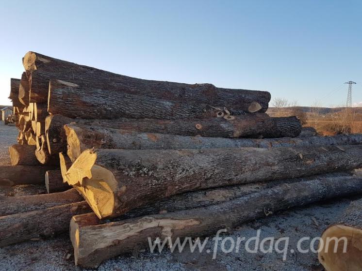 30--cm-Oak--Saw-Logs-from