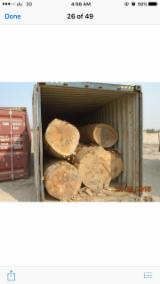 Tropical Wood  Logs For Sale - African Teak logs