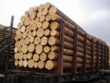 Thailand Softwood Logs - Pine Logs, 20 cm diameter