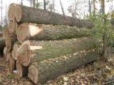 Thailand Hardwood Logs - European Poplar Logs