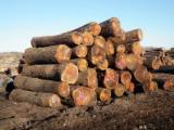 Thailand Hardwood Logs - Walnut Logs 10000 m3