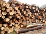 Thailand Hardwood Logs - Acacia Round Wood Logs