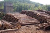 Northern White Cedar Softwood Logs - White Cedar peeling logs