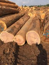 Tropical Wood  Logs For Sale - Bete/Mansonia boules, cut from B+ logs – can be cut in any thickness up to 150mm