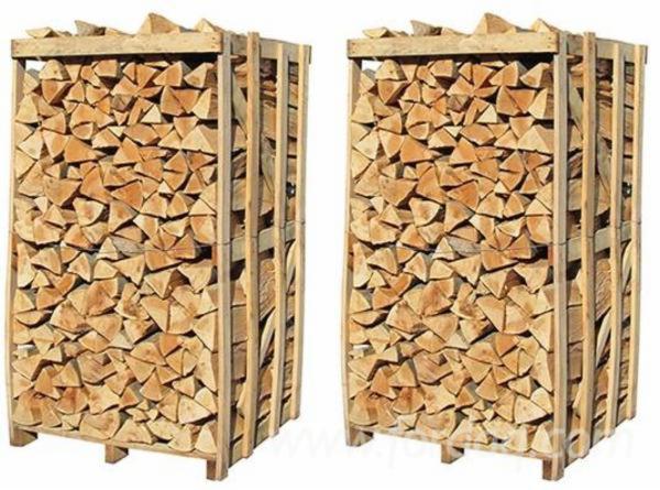 Searching-dried-Beech-firewood-