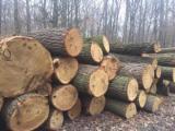 Hardwood Logs importers and buyers - Looking for European Oak Logs