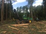 Forest Services - Urgently needed felling services
