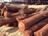 Schnittholzstämme, Chinesisches Rosenholz