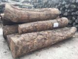 Hardwood Logs importers and buyers - We are in great demand for African rosewood