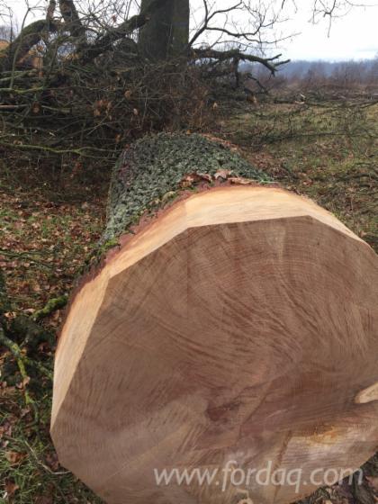 Vindem-Bustean-Pentru-Furnir-Stejar